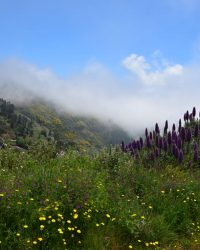 DIe Bergwelt bei Monte.
