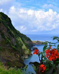 Flores - Die wilde Schöne....