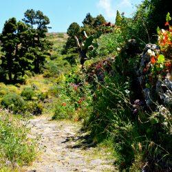 Wandern durch sattes Grünland.