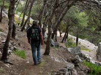 Waldspaziergang unterm Berggipfel bei Camacha.