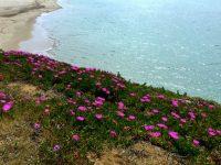 Am Strand von La Puntilla.