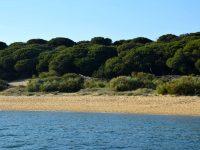 Der Strand dicht hinter der Einfahrt bei der Barra de Rompido