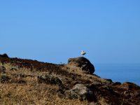 Madeira ist ein Paradies für Vögel.