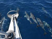 Delphine, Delphine. Wir können nicht mehr zählen.