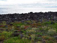 Viele Steine, wenig Land.