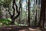Madeiras Wald.
