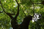 Laubbäume im Park Florestal das Fontinhas.