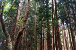 Dichter Wald bei Santo Espirito
