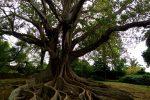 Ein Baum.