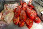 "Mercado in Ponta Delgado. Hier liegt unser Abendessen, ein ""Alfonsin""."