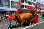 """Parade beim """"Festa do Espirito Santo"""". Jede Gemeinde der Insel nimmt mit einem geschmückten Ochsen-Karren teil..."""
