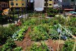 Urban Garden, Las Palmas.