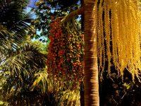 Exotische Palmen in Santa Cruz de Tenerife. Der Botanische Garten (Palmetum) wurde auf einem Müll- und Schuttberg errichtet.