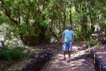 Gut ausgebaute Wanderwege im Kiefernwald bei El Pinar.