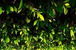 Unter grünem Blätterdach ....
