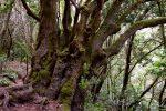 Parque Nacional de Garajonay.