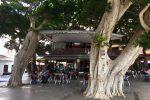 El Ciosco - unter Bäumen. San Sebastian.