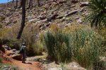 Es grünt überall, den der Barranco führt Wasser....