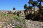 Der Barranco de las Penitas führt Wasser...