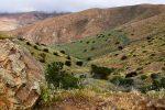 Nähe Betancuria, Fuerteventura. Hier gibts tatsächlich etwas Grün.