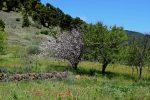 El Hierro ist im Frühling eine Blumenwiese.