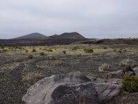 Ein zartes Grün erobert die Lavafelder.