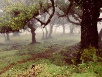 Im Hochland. Madeira.