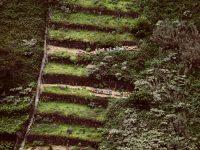Terassengärten in Madeira.