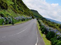 Hortensien blühen überall. Terceira im Juli.