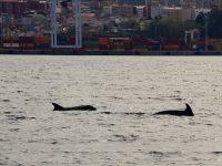 Einige Delphine begleiten uns...