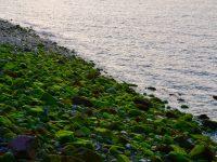 Steinstrand bei Camaret sur Mer.