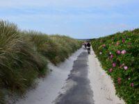 Strandspaziergang auf Hiddensee.