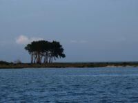 Schleimünde. Die typische Baumgruppe steht im Vogelschutzgebiet Oehe.