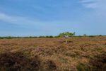 Samsø, die Heideflächen sind schier endlos.